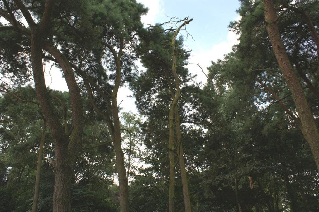 Dode bomen
