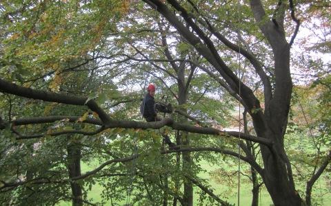 Snoeien van bomen en takken