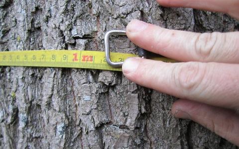 Inventarisatie van boombestanden