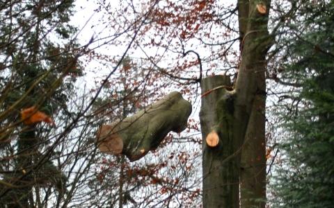 Vellen van bomen en opstanden