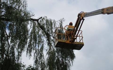 Machineverhuur voor de bosbouw